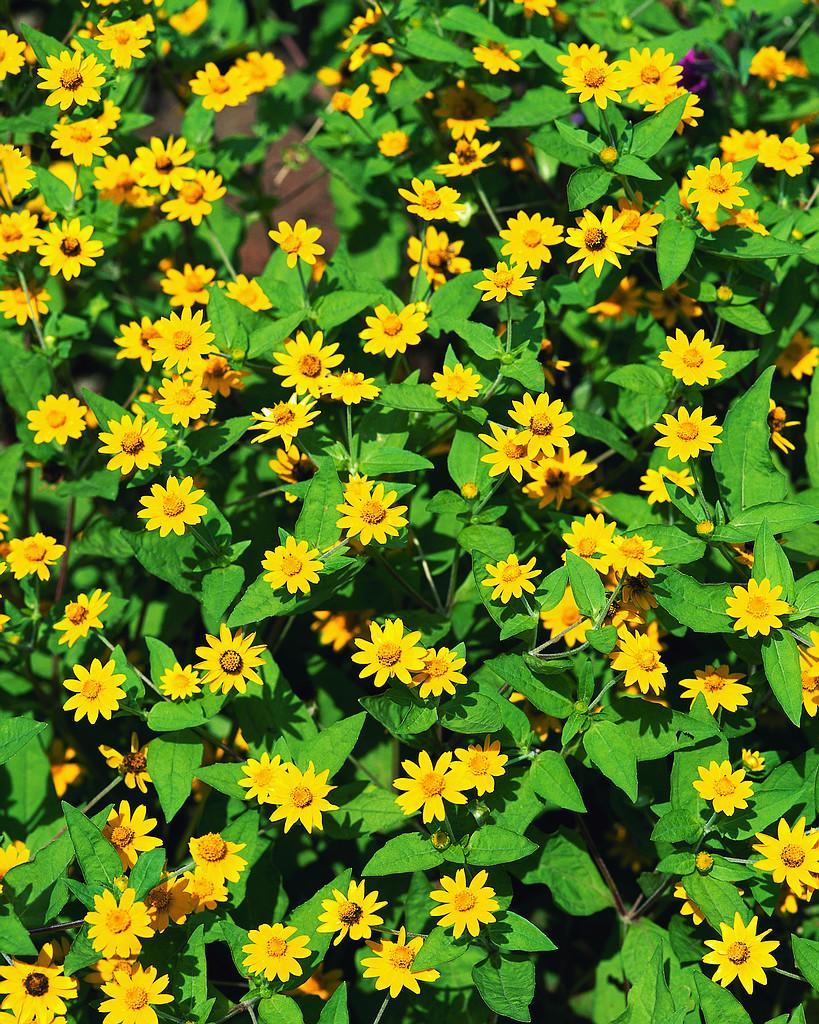 Popínavé rastliny | zásielkový obchod