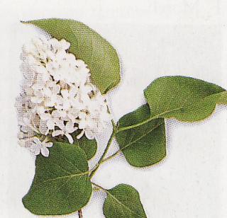 Kvitnúce kry a stromy
